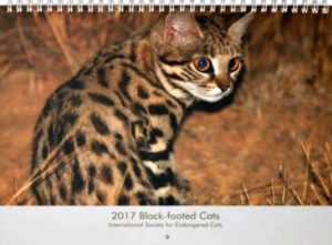 black-footed cat calendar
