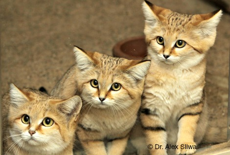 2016 sand cat group