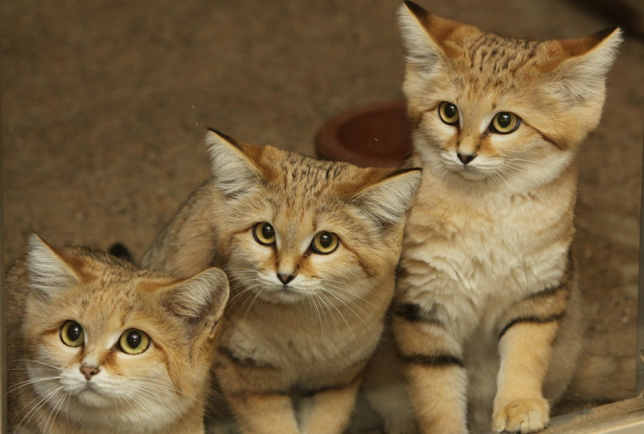 Homepage International Society For Endangered Cats Isec Canada